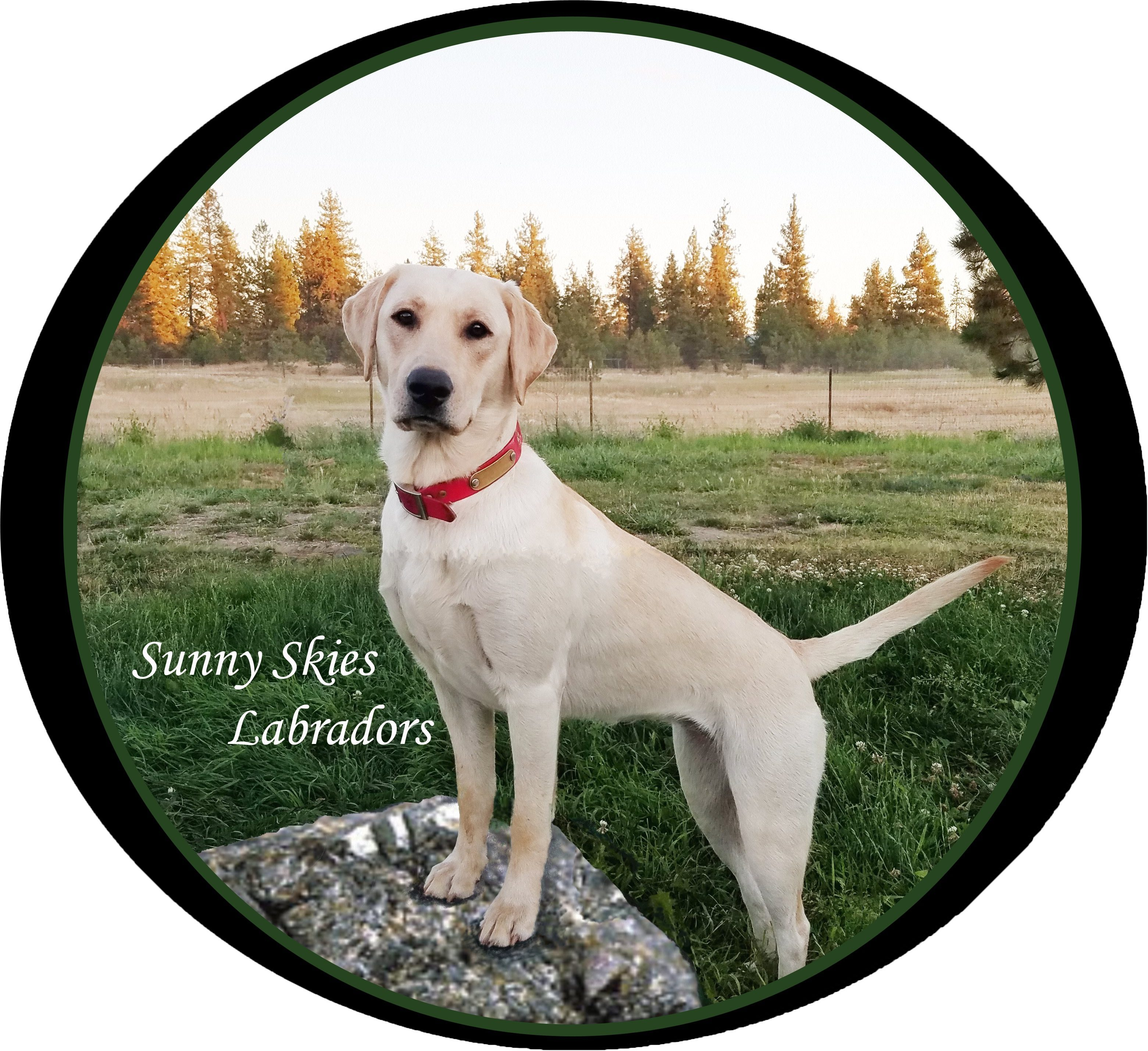 Sunny Skies Retrievers LLC, Lenore Idaho