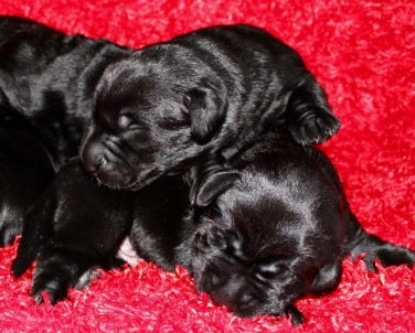 8 Days old