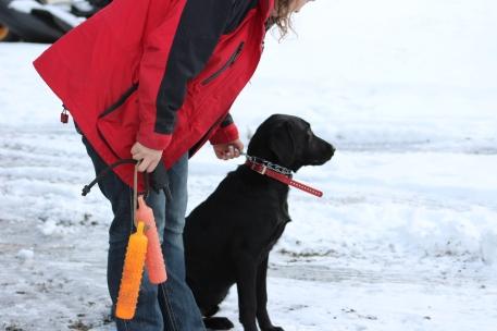 Ryder training for hunt test